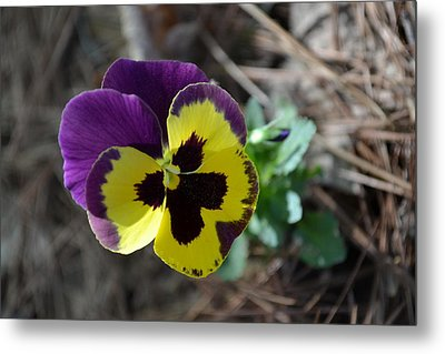 Metal Print featuring the photograph Purple And Yellow Pansy by Tara Potts