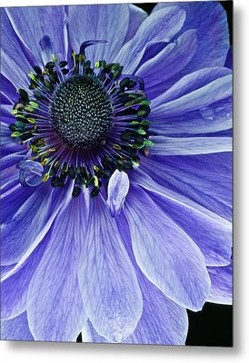 Purple Anemone Metal Print by Art Barker