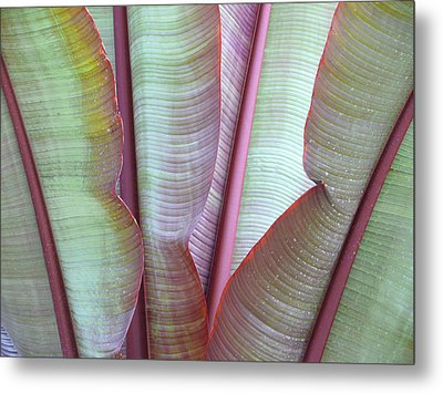 Metal Print featuring the photograph Purple Banana by Evelyn Tambour