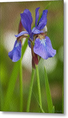 Purple Bearded Iris Oil Metal Print by Brenda Jacobs
