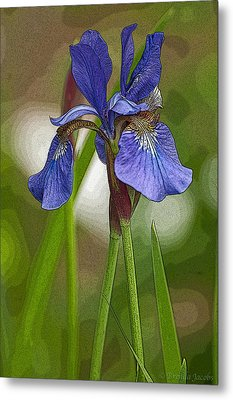 Purple Bearded Iris Watercolor With Pen Metal Print by Brenda Jacobs