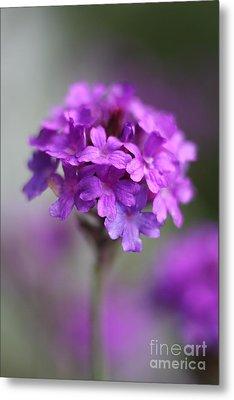 Purple Beauty Metal Print by Wobblymol Davis
