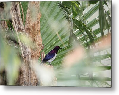 Purple Birs In Trees Metal Print
