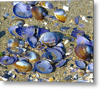 Purple Clam Shells On A Beach Metal Print by Sharon Talson