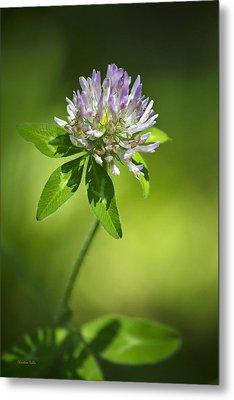 Purple Clover Flower Metal Print by Christina Rollo