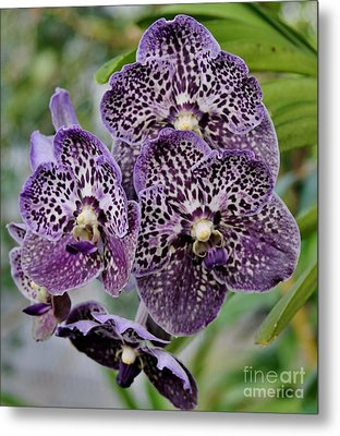 Purple Cluster Metal Print by Butch Phillips