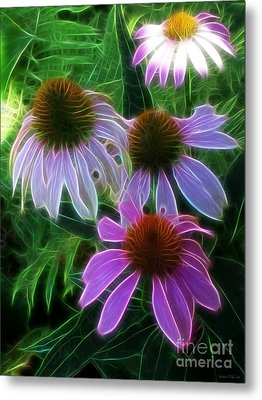 Purple Coneflower Echinacea Metal Print