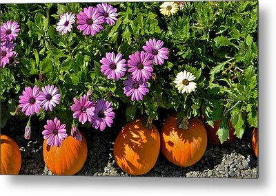 Purple Daisies And A Touch Of Orange Metal Print by Jean Goodwin Brooks