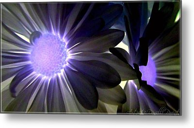 Purple Daisies Negative Effects Metal Print by Danielle  Parent