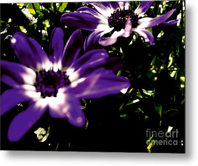 Purple Daze Metal Print by Cathy Dee Janes