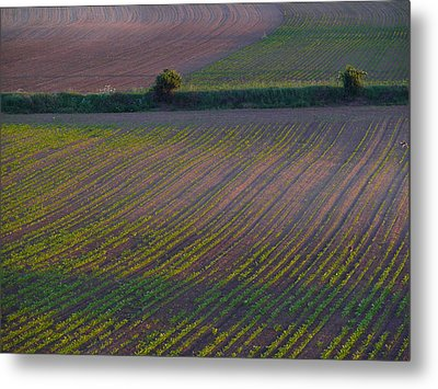 Purple Fields Metal Print by Evelyn Tambour