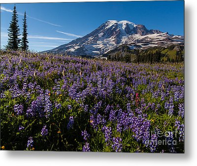 Purple Fields Forever And Ever Metal Print