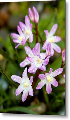 Purple Flower Metal Print by Bob Noble Photography