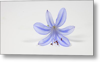 Purple Flower Metal Print by Cecil Fuselier