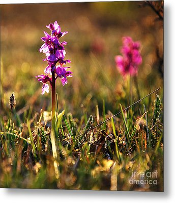 Metal Print featuring the photograph Purple Flower In Back Light by Kennerth and Birgitta Kullman