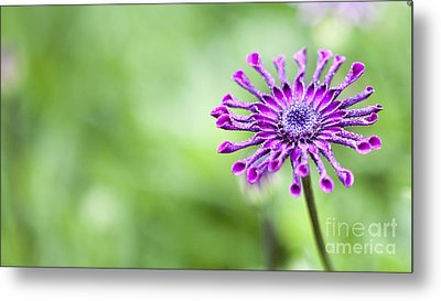 Purple Flower Metal Print by Serene Maisey