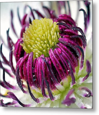 Purple Flower Metal Print by Tommytechno Sweden