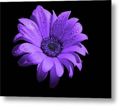 Purple Flower With Rain Metal Print by Bruce Nutting