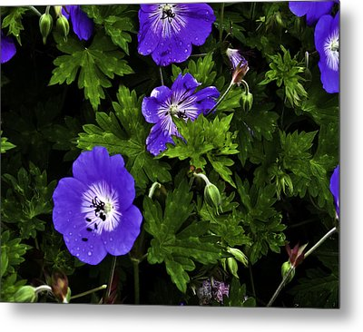 Metal Print featuring the photograph Purple Flower01 by Timothy Latta