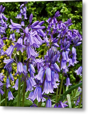 Metal Print featuring the photograph Purple Flowers by Gena Weiser