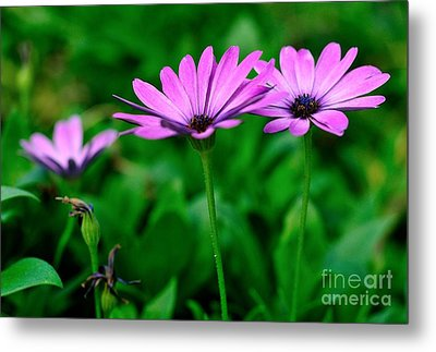 Metal Print featuring the photograph Purple Flowers by Joe  Ng