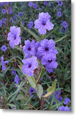 Metal Print featuring the photograph Purple Flowers by Laurel Powell
