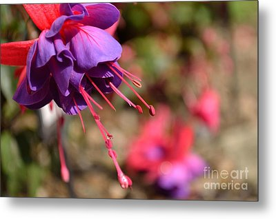 Purple Fuchsia Metal Print by Scott Lyons