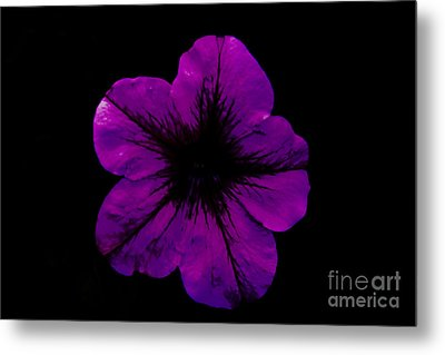 Metal Print featuring the photograph Purple Geranium by Scott Lyons