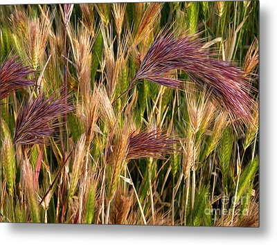 Purple Grasses Metal Print
