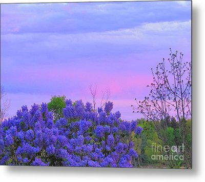 Purple Haze Metal Print by David Lankton