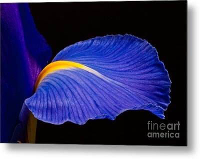 Purple Iris #1 2010 Metal Print by Art Barker