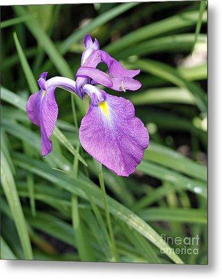 Purple Iris Metal Print by Denise Pohl
