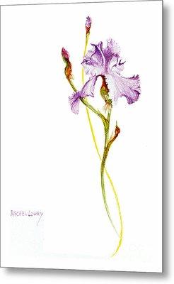 Purple Iris Metal Print by Rachel Lowry