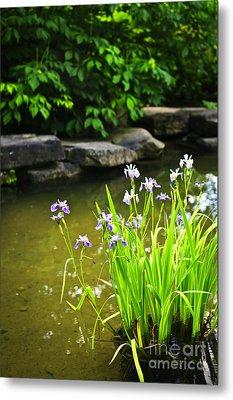 Purple Irises In Pond Metal Print by Elena Elisseeva
