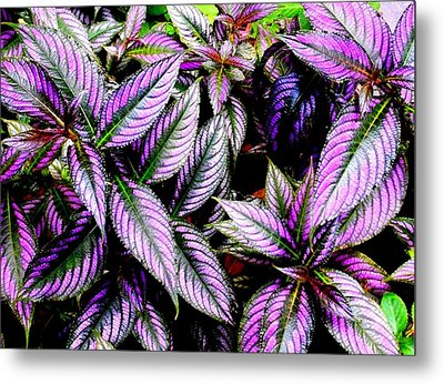 'purple' Metal Print