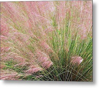 Purple Muhly Grass 2 Metal Print