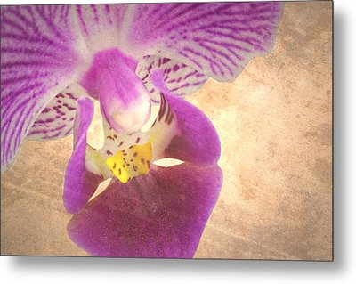 Purple Orchid 1 Metal Print by Rudy Umans