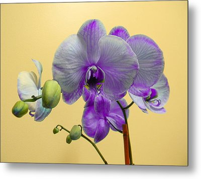 Purple Orchid Metal Print by Christy Usilton