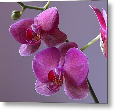 Purple Orchid Metal Print by Kathy Eickenberg