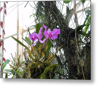 Purple Orchid Metal Print by Kay Gilley