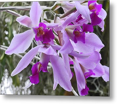 Purple Orchid Personality Metal Print by Patricia Greer