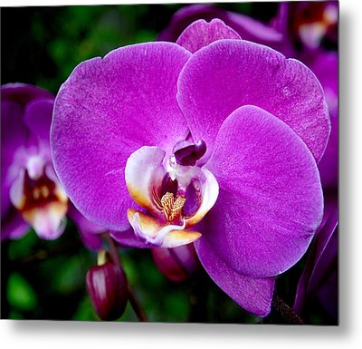 Purple Orchid Metal Print by Rona Black