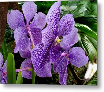Purple Orchids Metal Print by Carey Chen