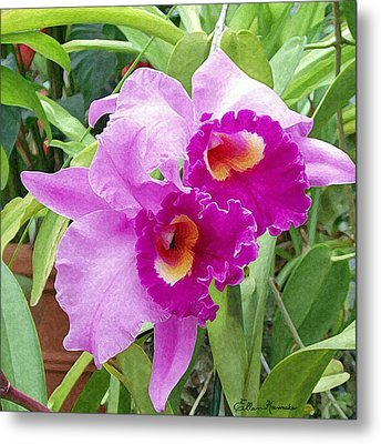 Purple Cattleya Orchids Metal Print by Ellen Henneke