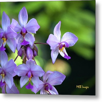 Purple Orchids Metal Print by Margaret Buchanan