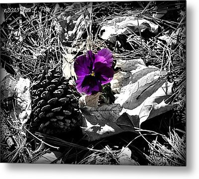 Metal Print featuring the photograph Purple Pansy by Tara Potts