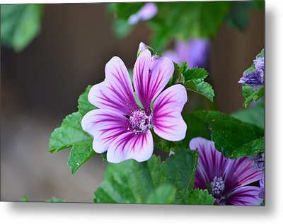 Purple Passion Metal Print by Jennifer  King