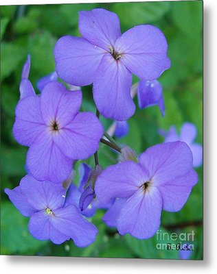 Metal Print featuring the photograph Purple Passion by Sara  Raber