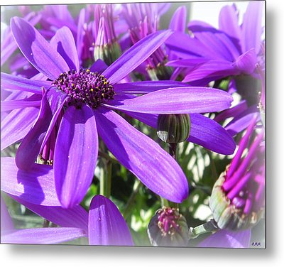 Purple Petals Metal Print by Heidi Manly