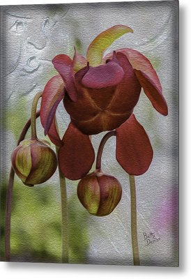 Metal Print featuring the photograph Purple Pitcher Plant by Betty Denise